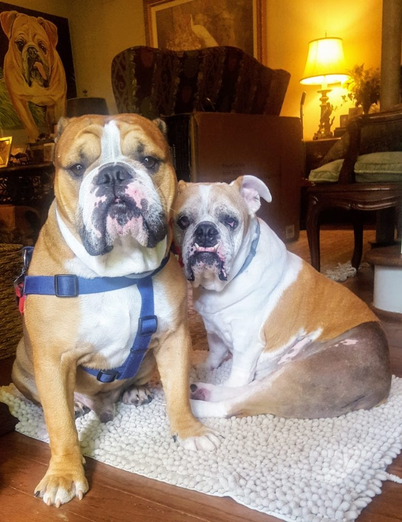 Porkchop and Maggie-Nicole Gaines Doyle