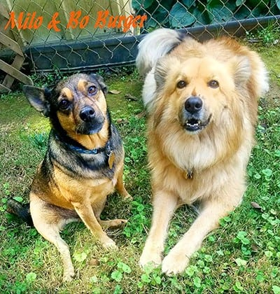 Milo and Bo