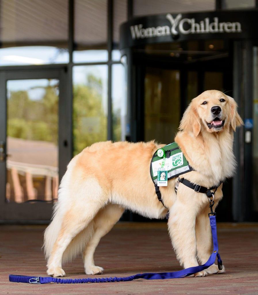 Asteroid - Huntsville Hospital Women & Children's Service Dog